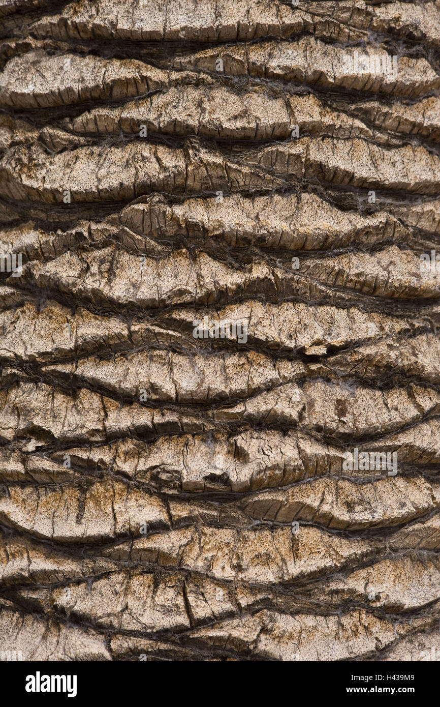 Palm, tree bark, detail, tree, trunk, bark, surface, fissures, forms, structure, brown, background, Spain, - Stock Image