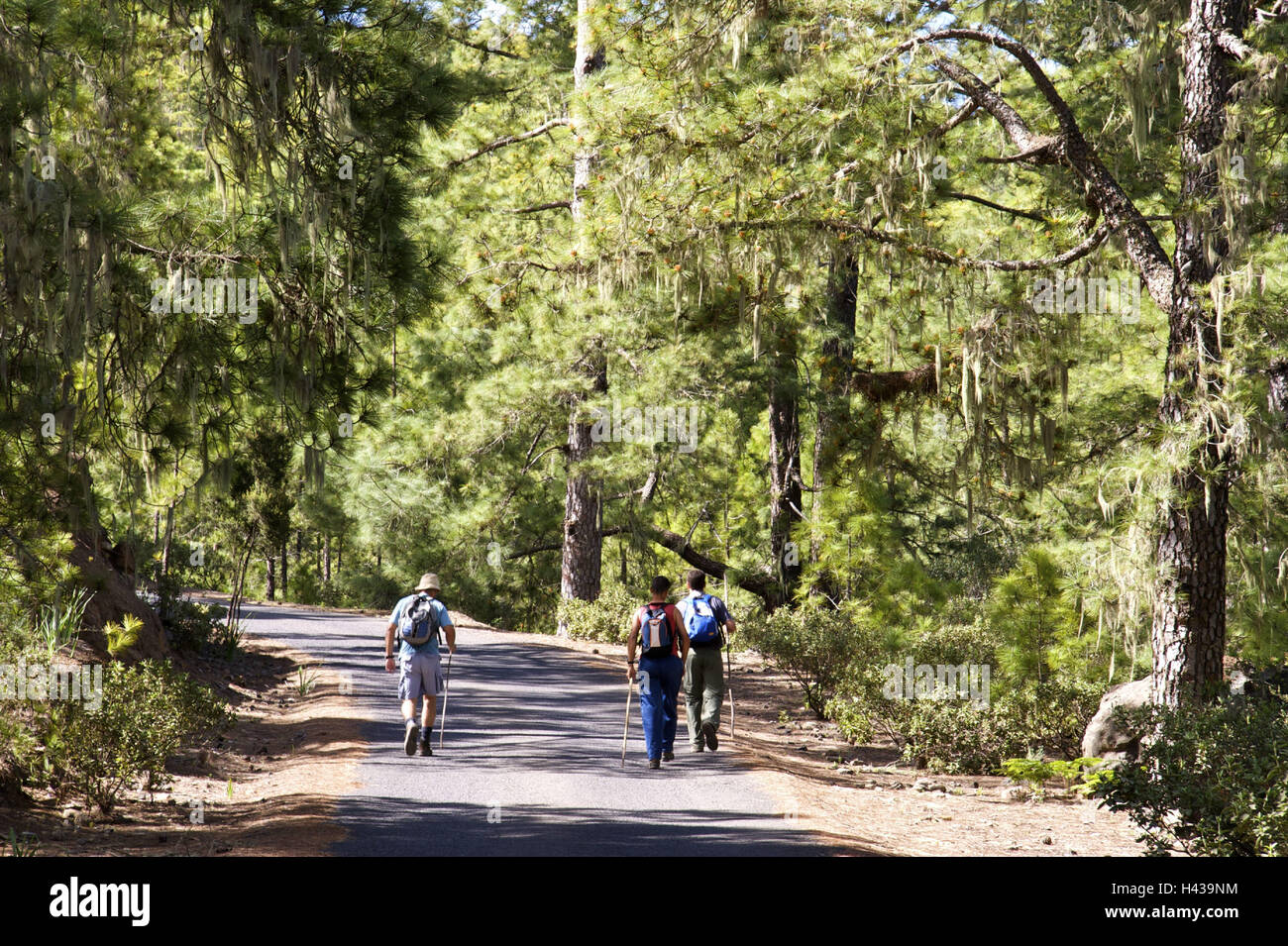 Spain, Canary islands, grain Canaria, inland, woodland Tamadaba, wanderer, - Stock Image