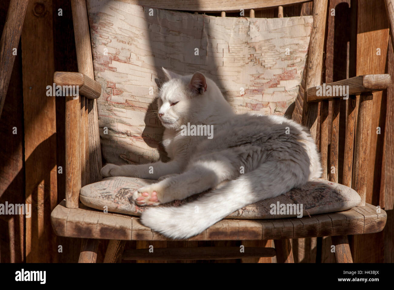 Comfy cat in chair. - Stock Image