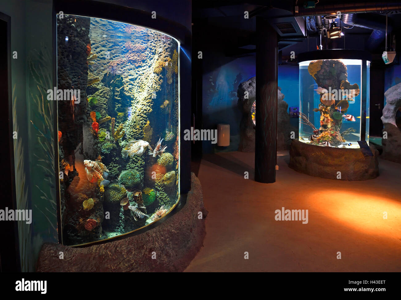 Interior of Sylt Aquarium, Westerland, Sylt, North Frisian Islands, North Frisia, Schleswig-Holstein, Germany - Stock Image