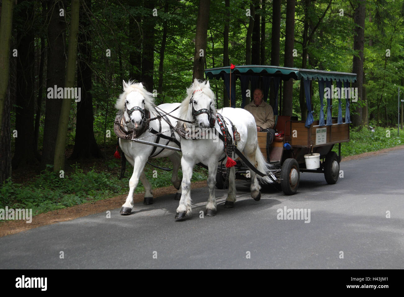 Germany, Saxon Switzerland, bastion, wood, horse's carriage, - Stock Image