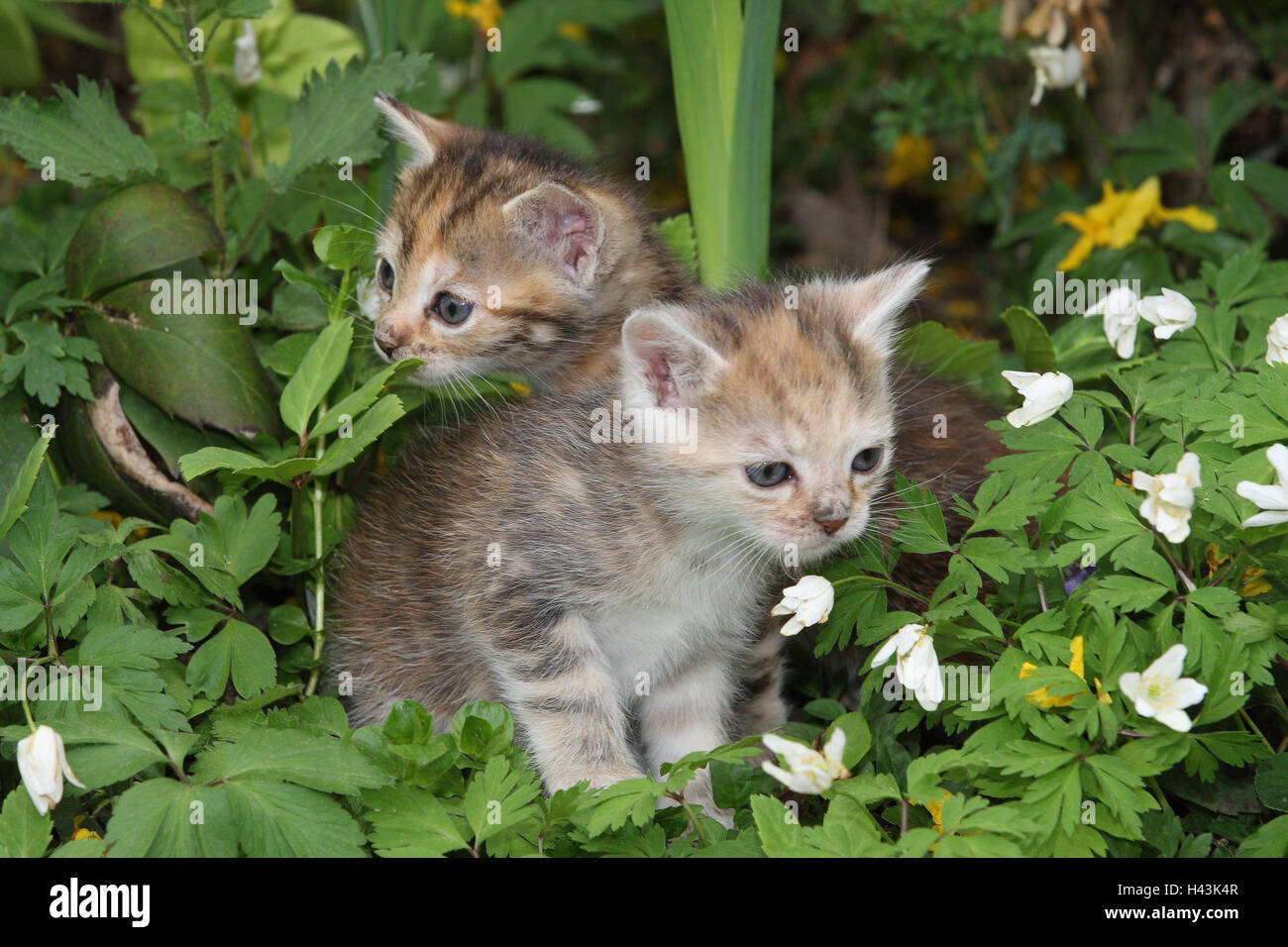 Cats, Young, Sit, Meadow, Garden, Animals, Mammals, Pets, Small Cats,  Felidae, Domesticates, House Cat, Young Animal, Kitten, Two, Siblings,  Play, Together, ...