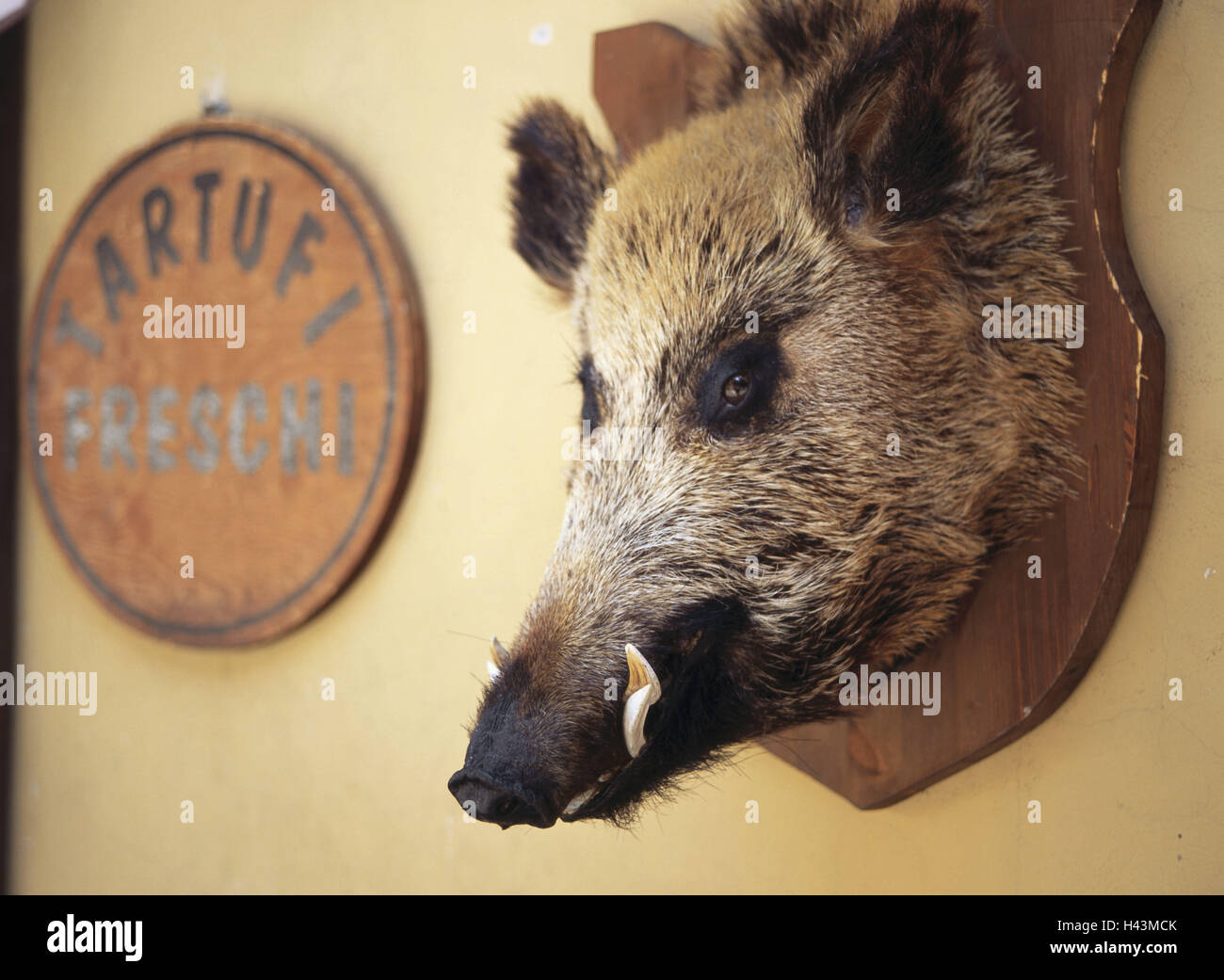 Hunting Trophy Wild Boars Head Wall Decoration