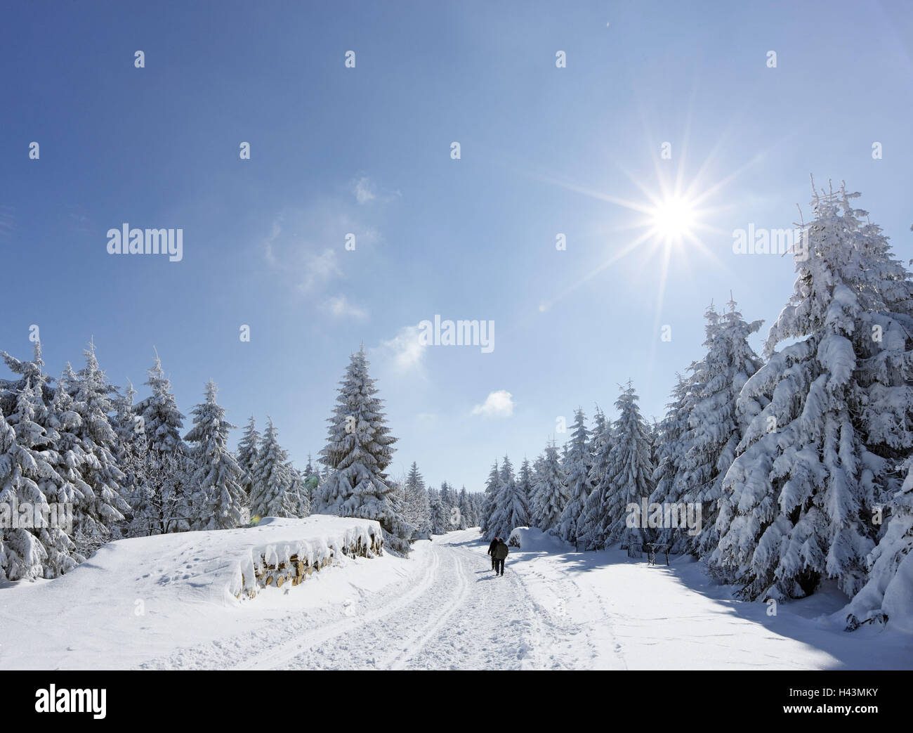 Path, hikers, snow, spruces, forest, sun, - Stock Image