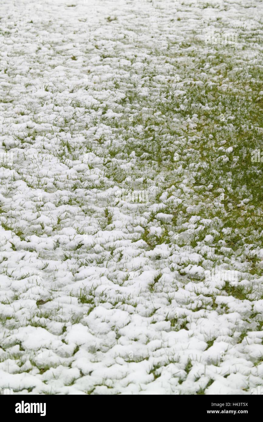 Turfs, snow, grass, season, winter, wintry, snow-covered, meadow, melt, lawn, blades grass, thaw, dank, - Stock Image