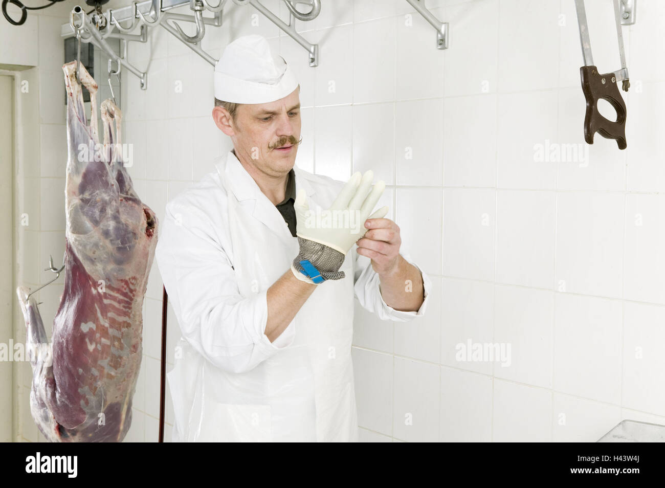 Butcher, deer, jointing, protective glove, rubber glove, putting on, hygiene, butcher's shop, red deer, venison, - Stock Image