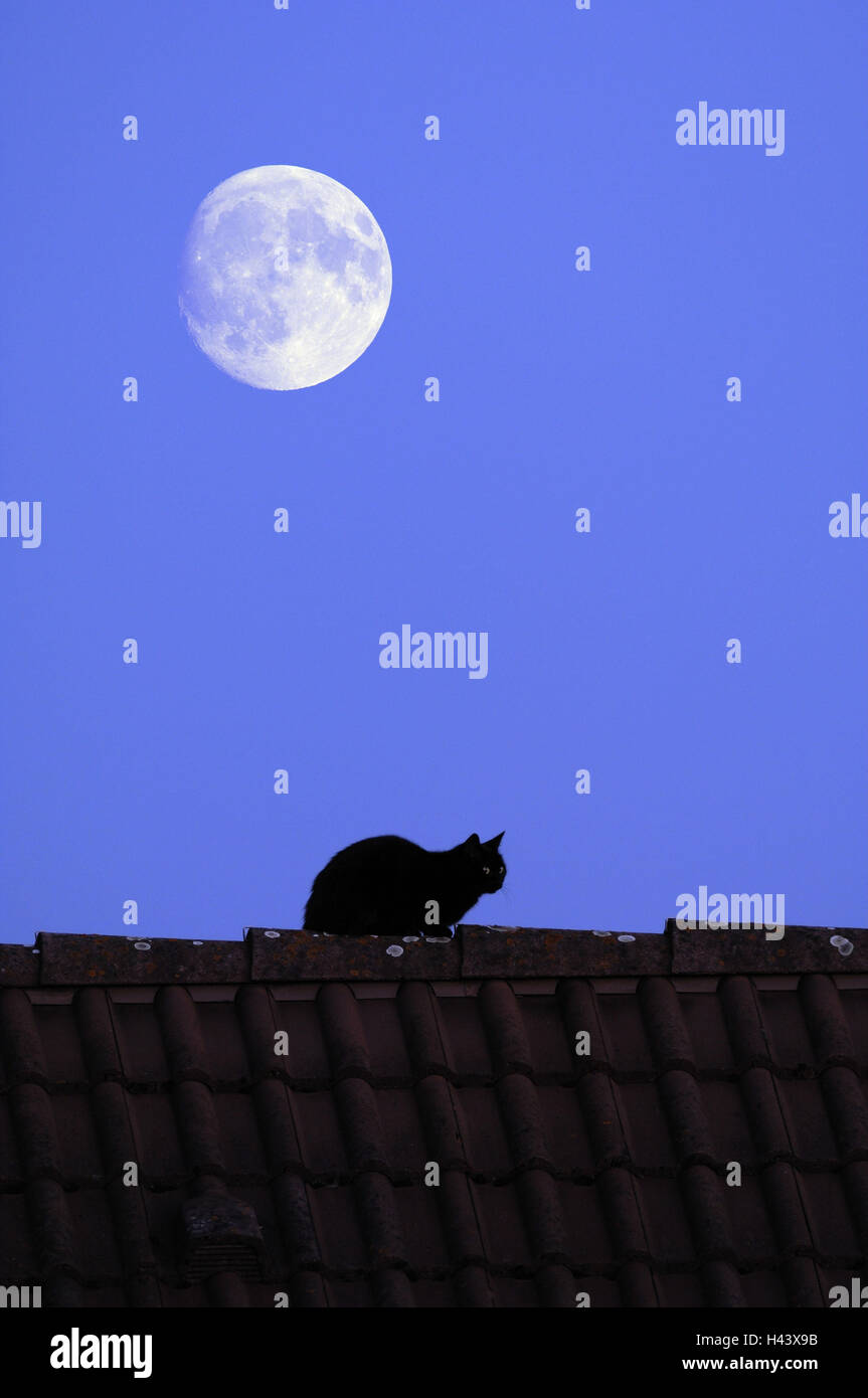 Roof, house cat, moon, - Stock Image