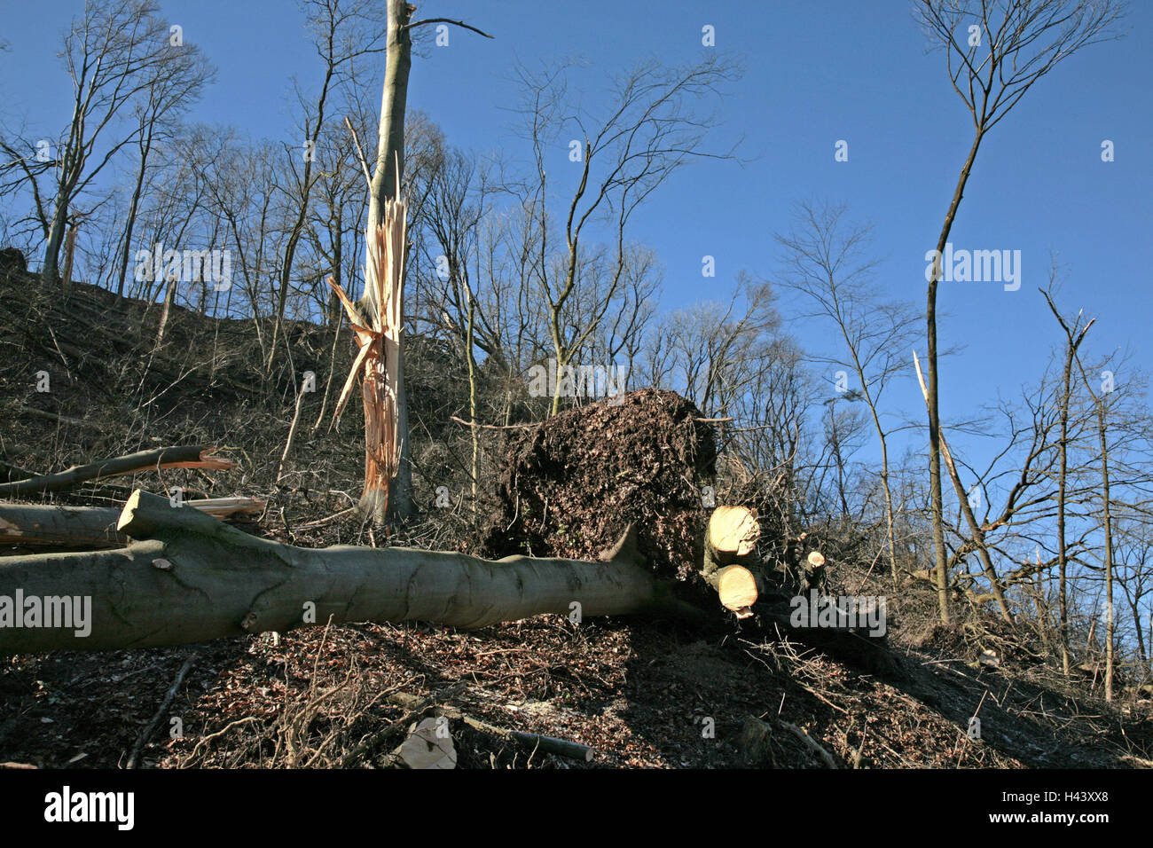 Germany, Bavaria, Landshut, barrack mountain, attack damages, Upper Bavaria, wood, trunks, twigs, branches, lie, - Stock Image