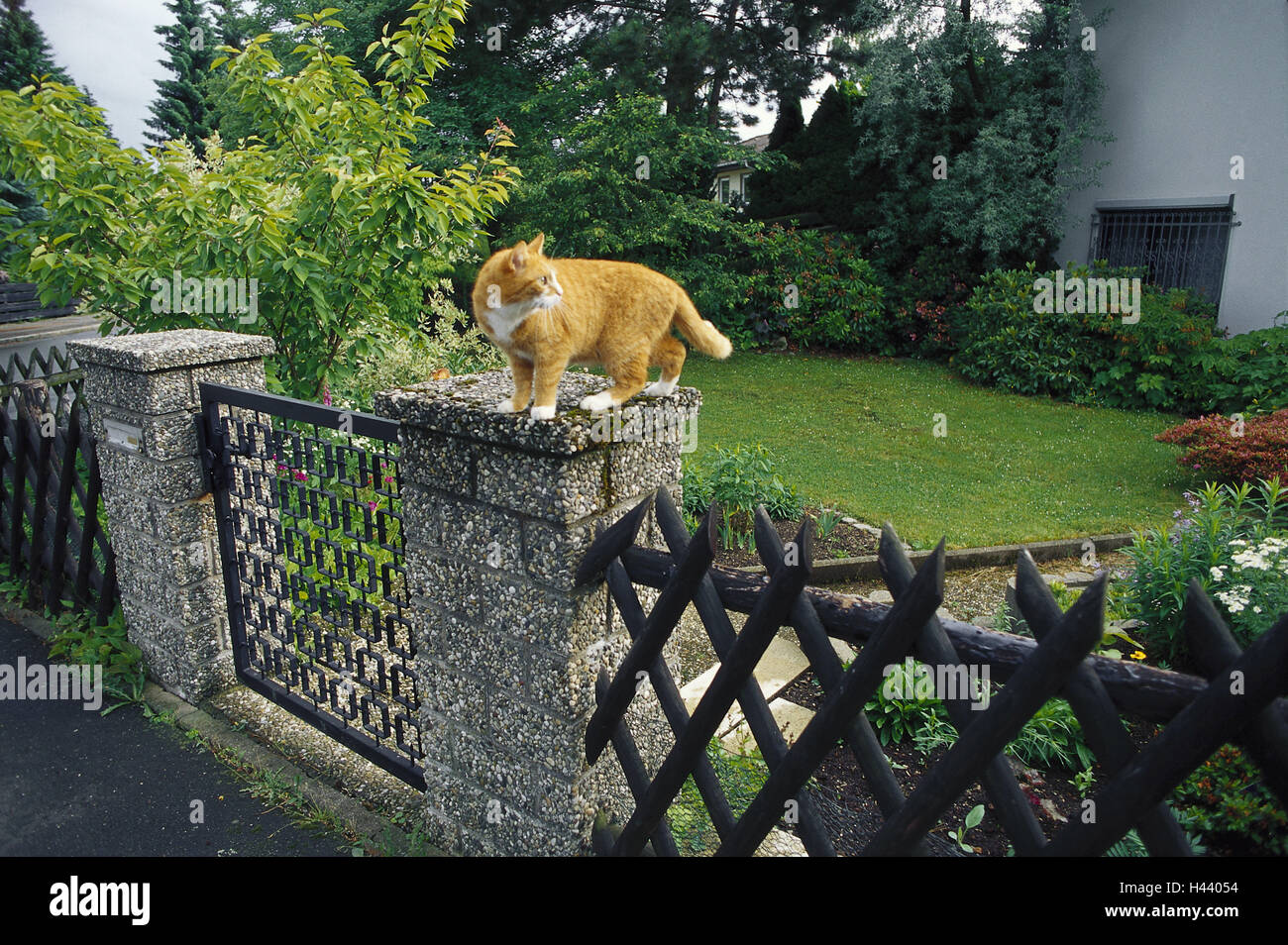 Garden fence, gatepost, cat, sit, look around side view, fence, garden, property, goal, garden goal, post, pillar, - Stock Image