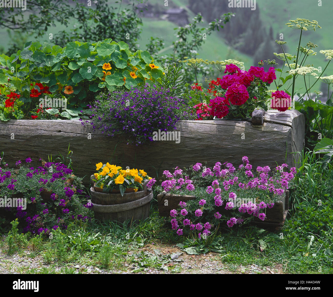 Wooden Trough, Flowers, Blossom, Differently, Nostalgically, Rurally,  Rural, Garden, Cottage Gardens, Flower Trough, Water Trough, Old, Converts,  Plants, ...