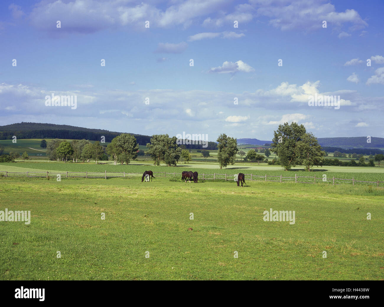Germany, Bavaria, Central Franconia, white castle, scenery, pasture, horses, francs, agriculture, civilised country, - Stock Image