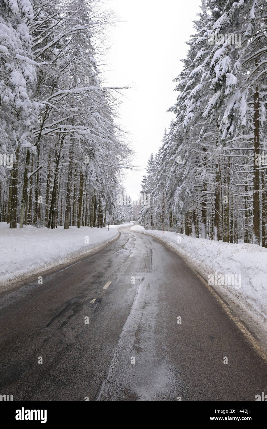 Germany, Baden-Wurttemberg, Black Forest, Kandel, country road, trees, winters, - Stock Image