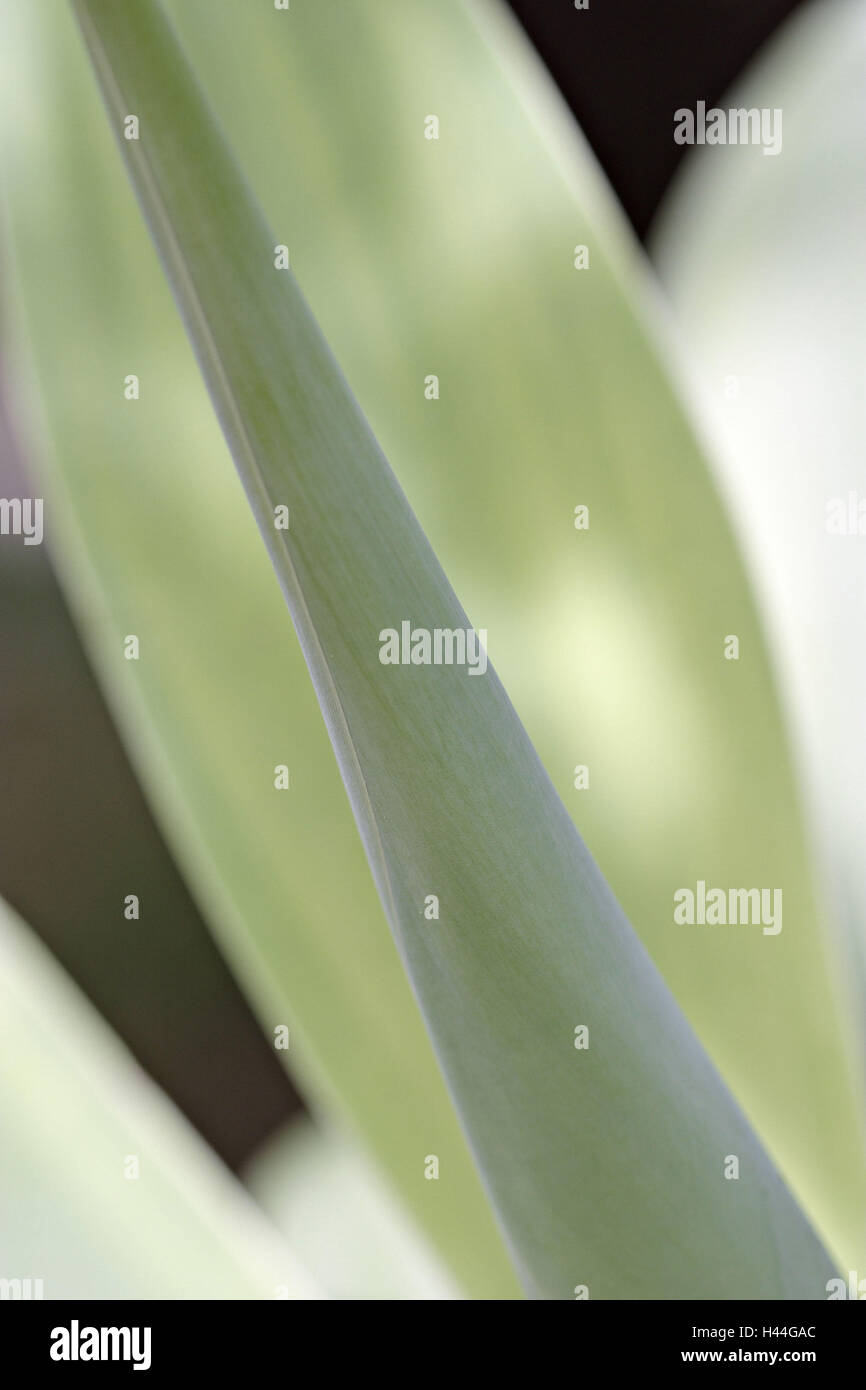 Plant leaves, green, close up, - Stock Image
