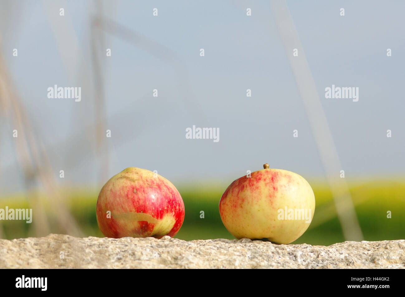 More poorly, apples, - Stock Image