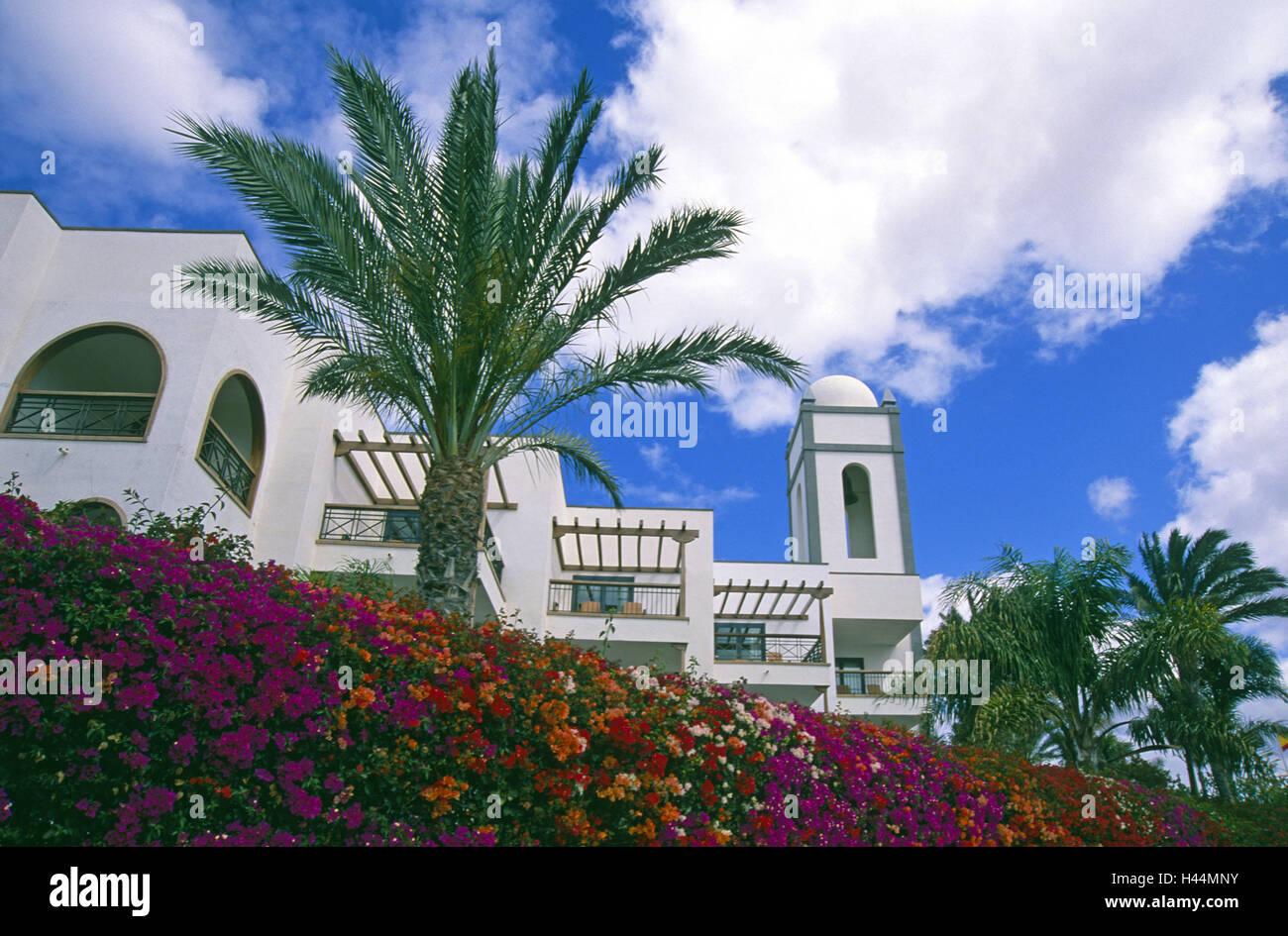 Spain, the Canaries, island Lanzarote, Playa Blanca, bougainvillaea, hotel, - Stock Image