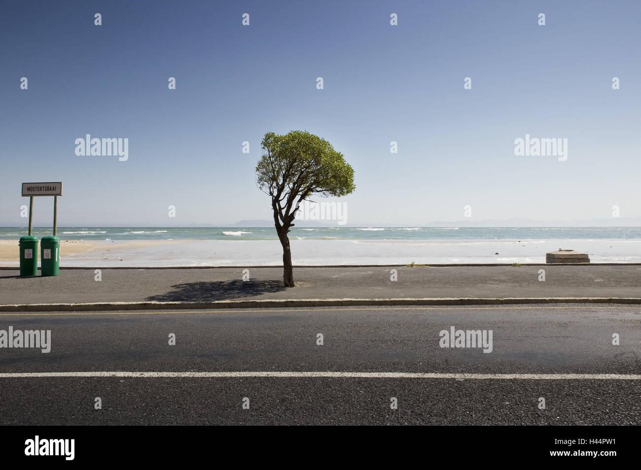 South Africa, Western Cape, Cape Peninsula, False Bay, beach, tree, warped, - Stock Image