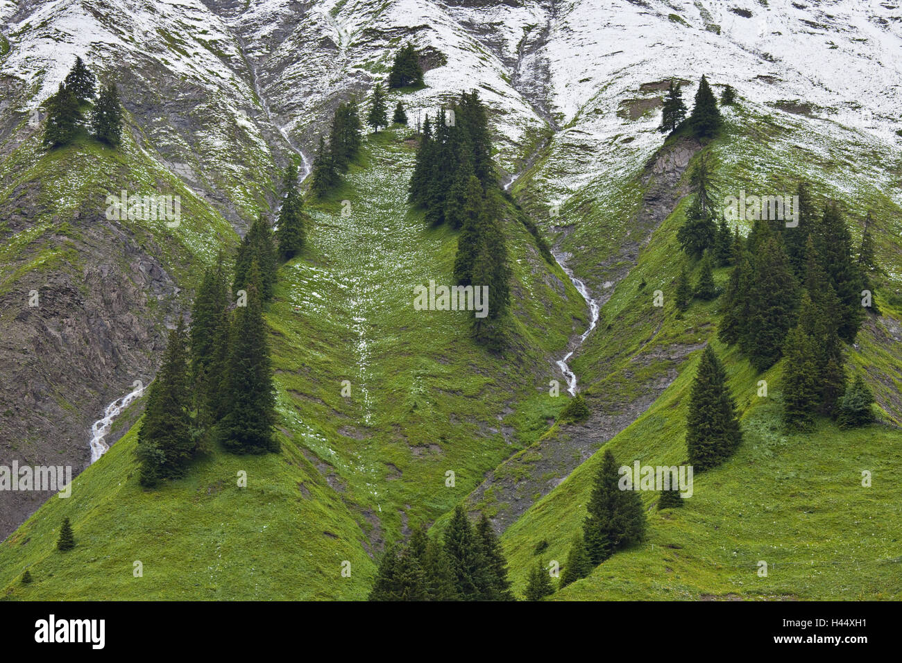 Austria, Vorarlberg, Hochtannberg Pass, spruces, snow, Stock Photo