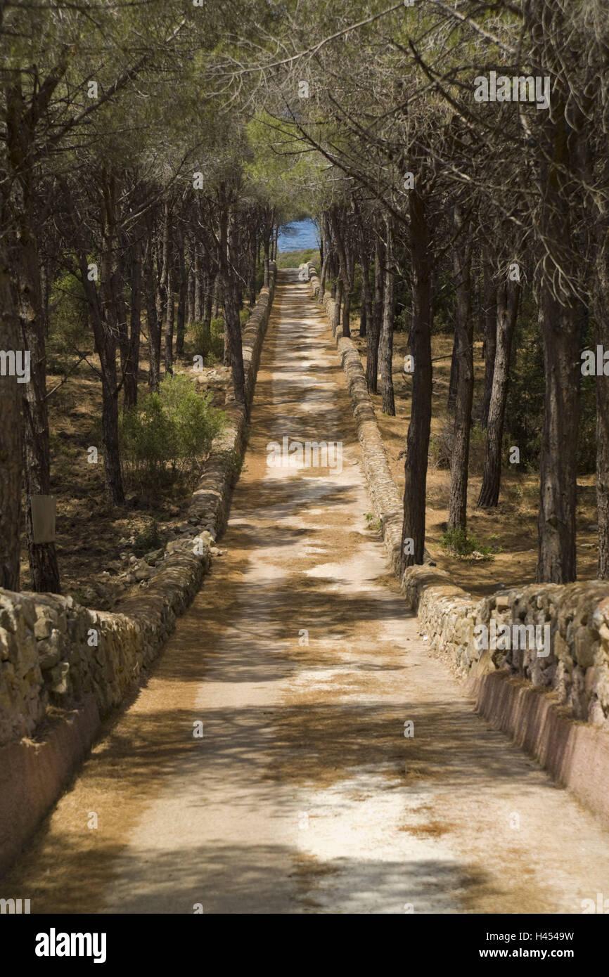 Italy, island Sardinia, Vignola Mare, pine wood, street, avenue, loneliness, trees, way, distance, season, nobody, - Stock Image