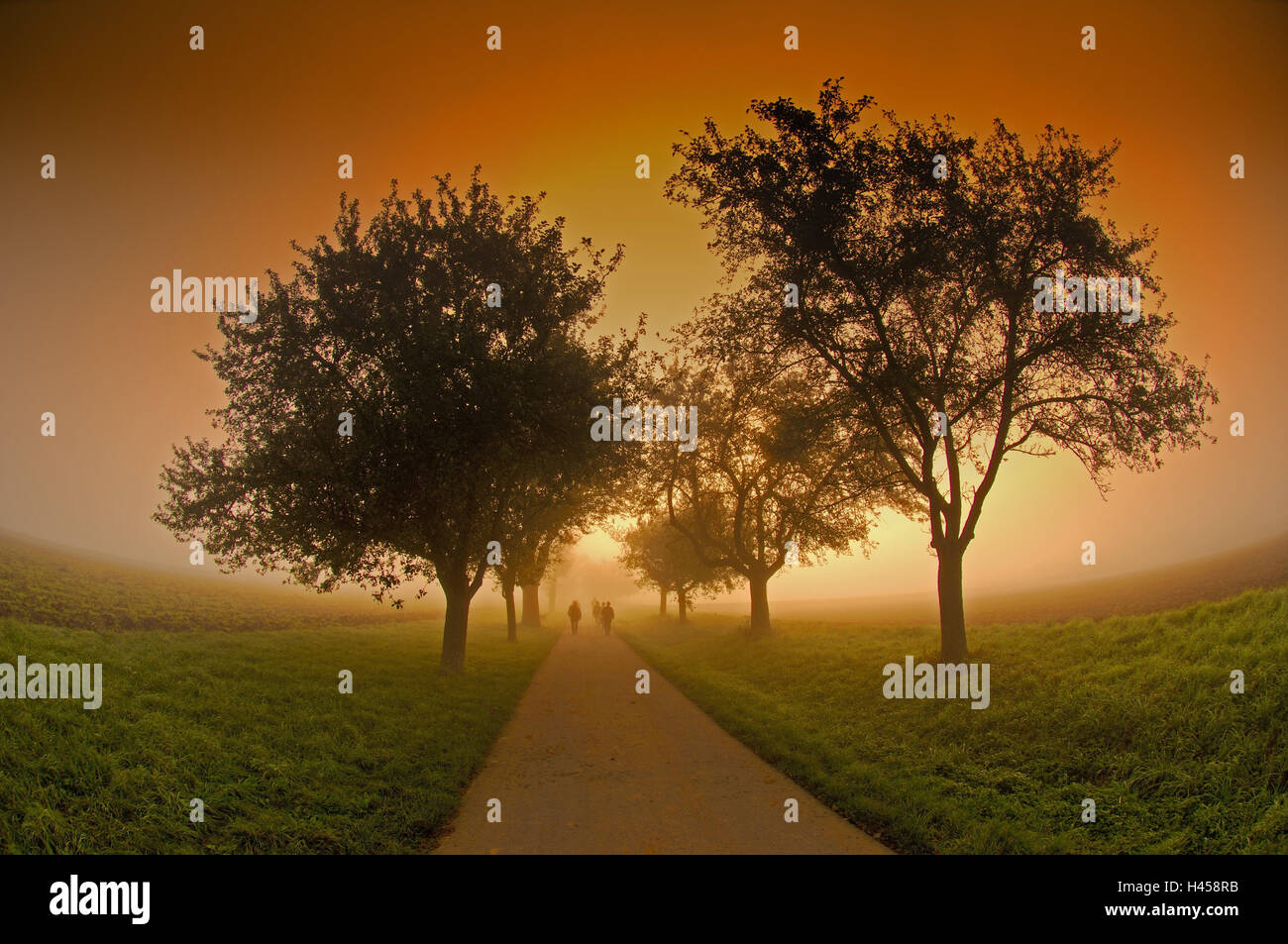 Track, fogs, people, goes,  Move opinion, [M], - Stock Image