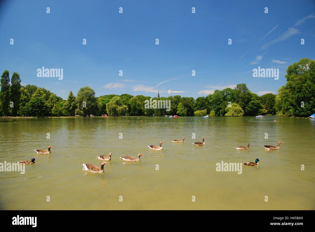Germany, Bavaria, Munich, English garden, Kleinhesseloher lake, - Stock Image