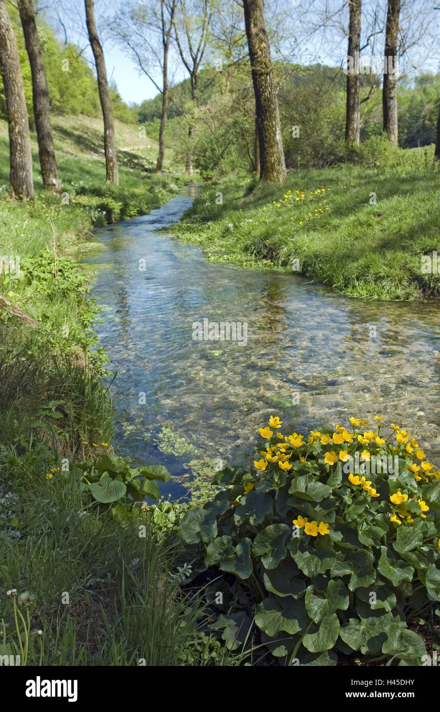 Scenery, brook, marsh marigolds, Caltha palustris, Germany, home Eder, home Hürn, trout brook, waters, stream course, Stock Photo
