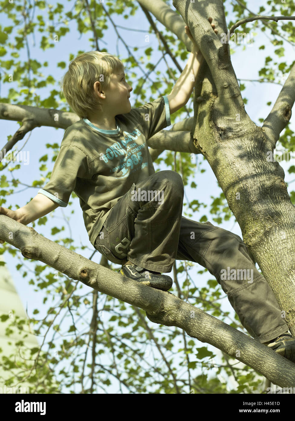 Boy, tree, climb, observe - Stock Image