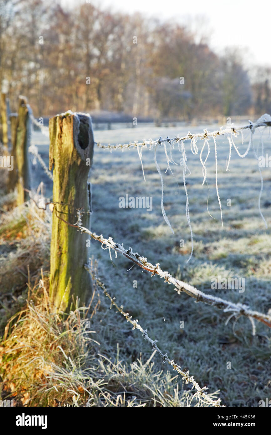 Barbed wire fence, - Stock Image