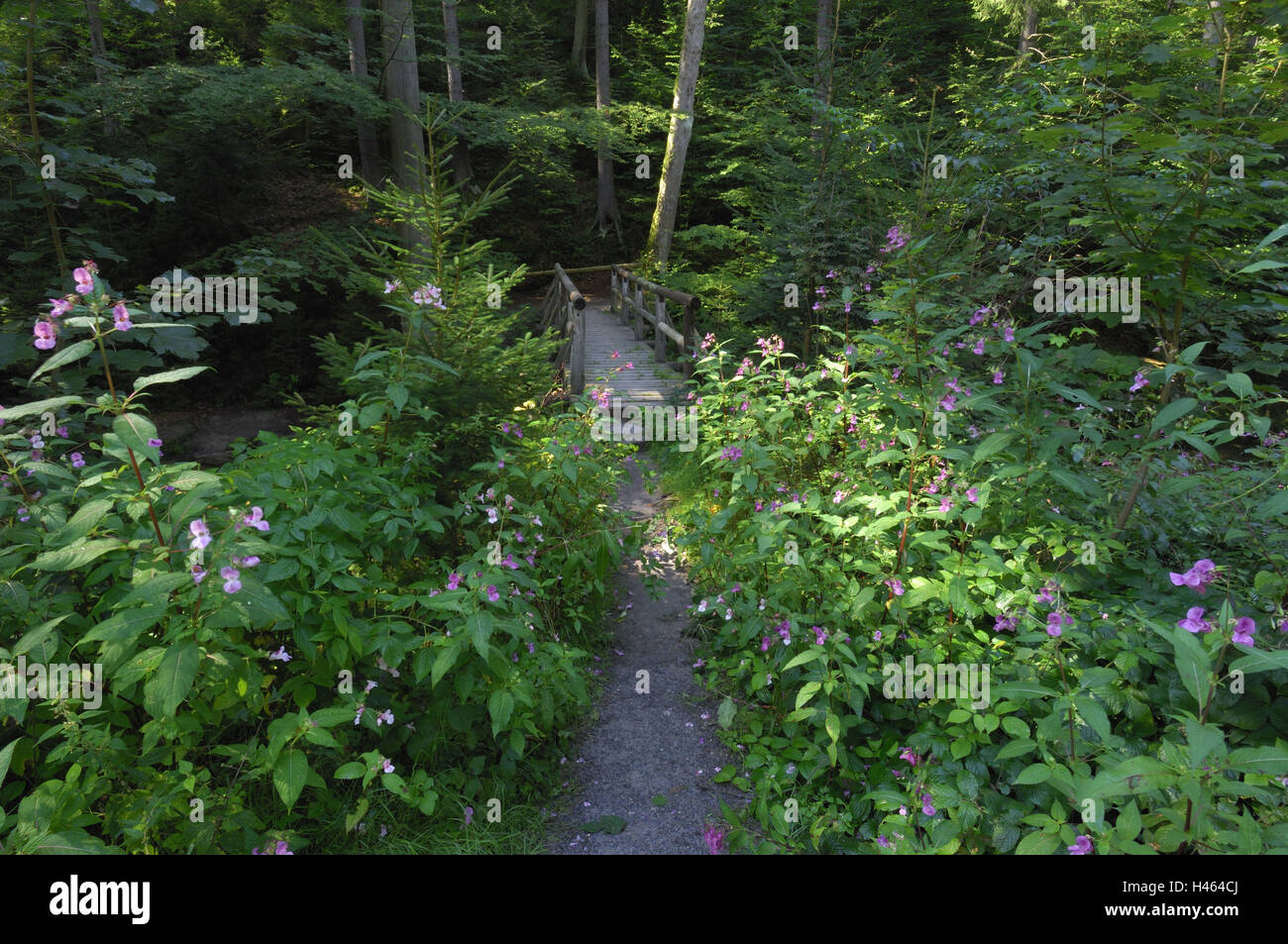 Wooden bridge, brook, forest brook, Germany, Saxony, National Park, Saxon Switzerland, - Stock Image
