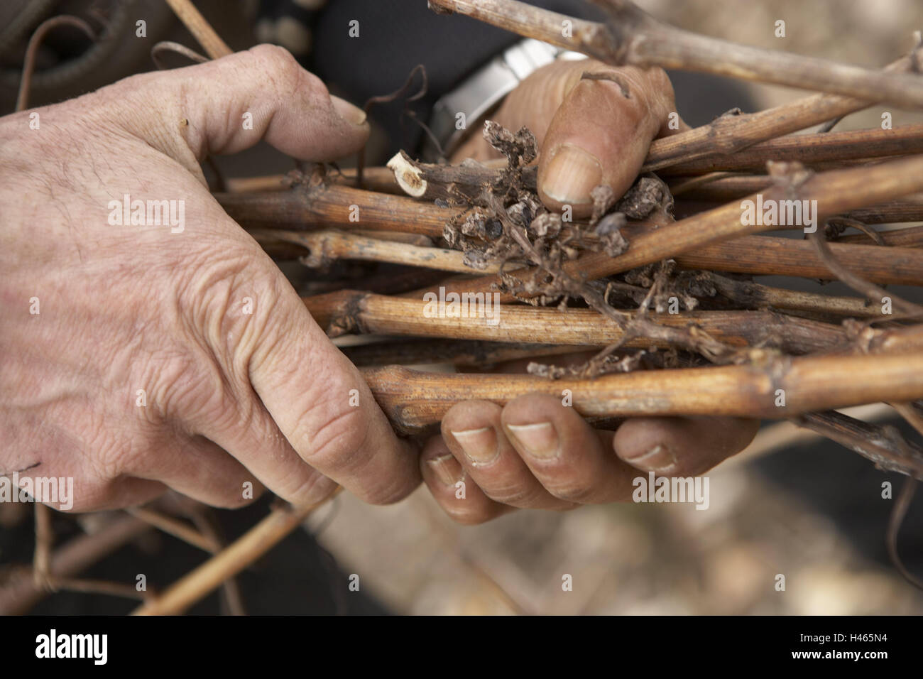 Man, hands, detail, branches, hold, Stock Photo