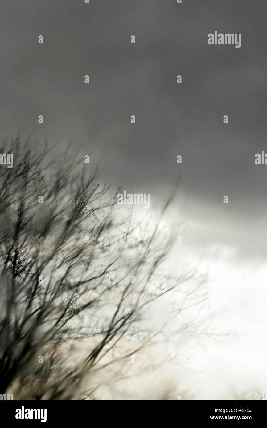 Window, view, tree, rain clouds, dreary, gloomily, grey, discouraging, window pane, room, room, inside, closed, - Stock Image