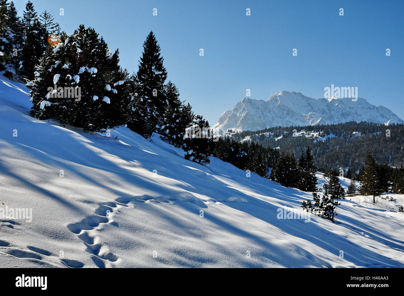 Winter, snow surface, winter wood, mountains, animal tracks, - Stock Image