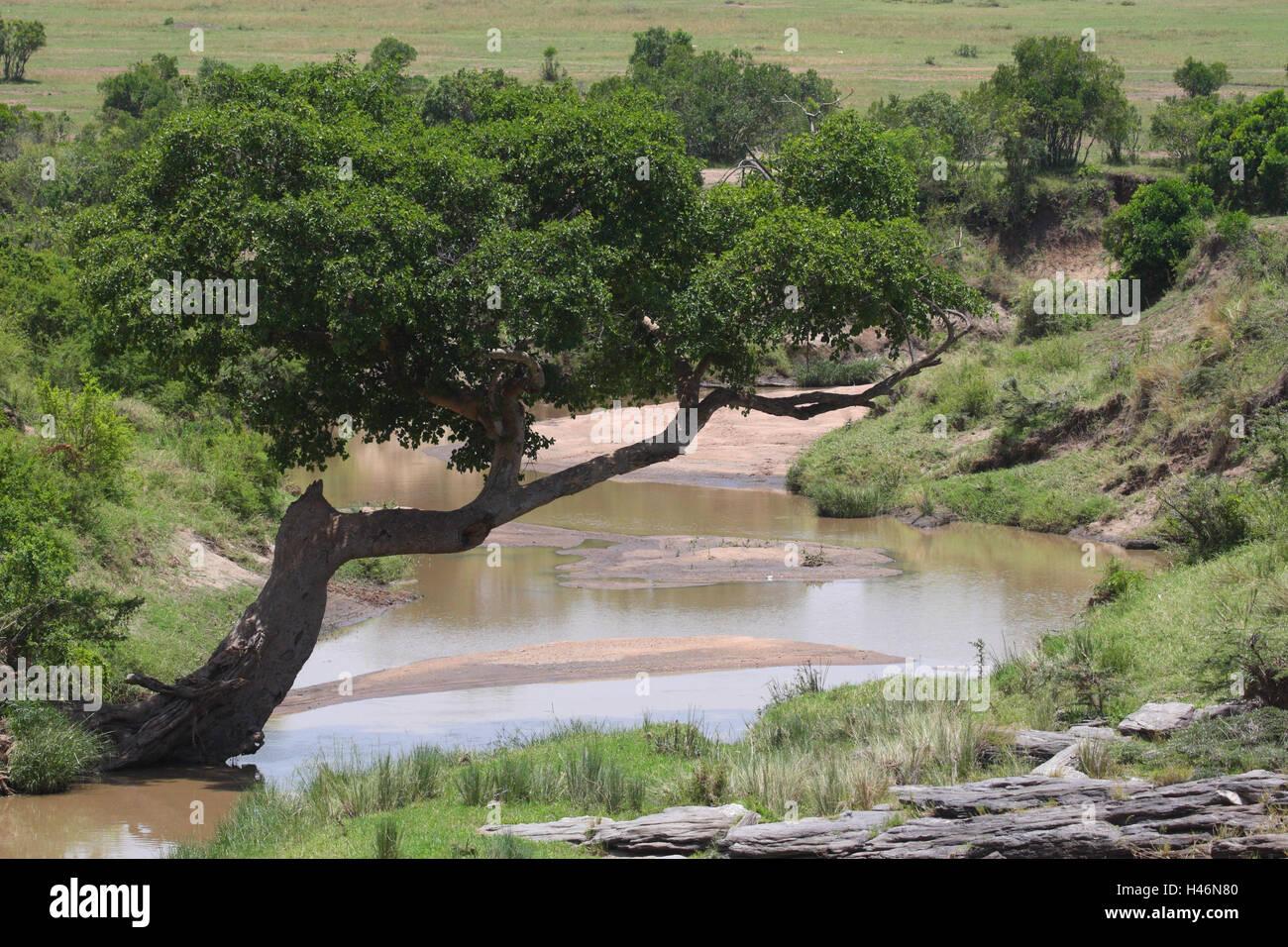 Mara Fluss in the Masai Mara, Africa, Kenya, - Stock Image