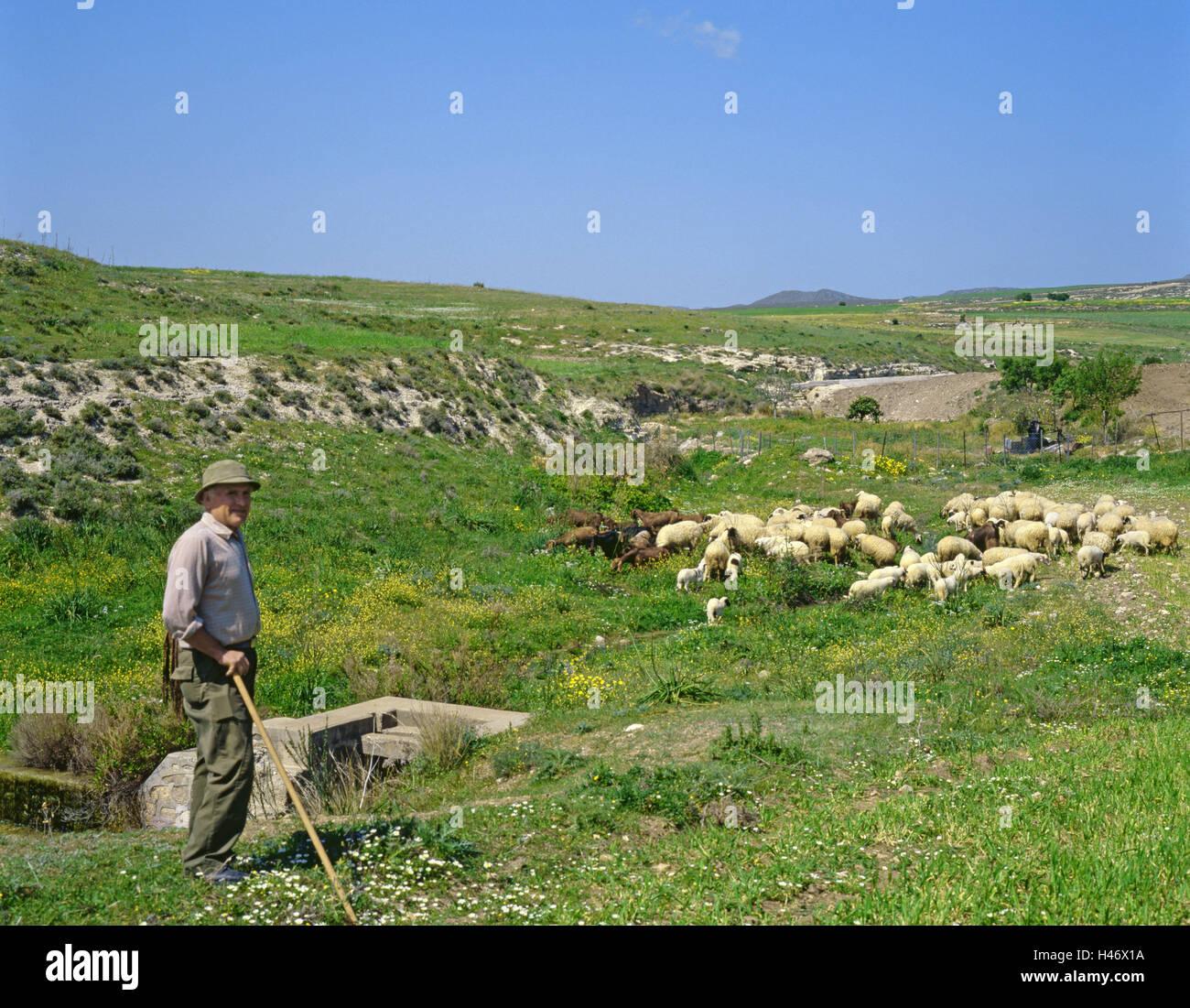 Cyprus, in Greek, pasture, flock of sheep, shepherd, no model release, Europe, Mediterranean island, island, island - Stock Image