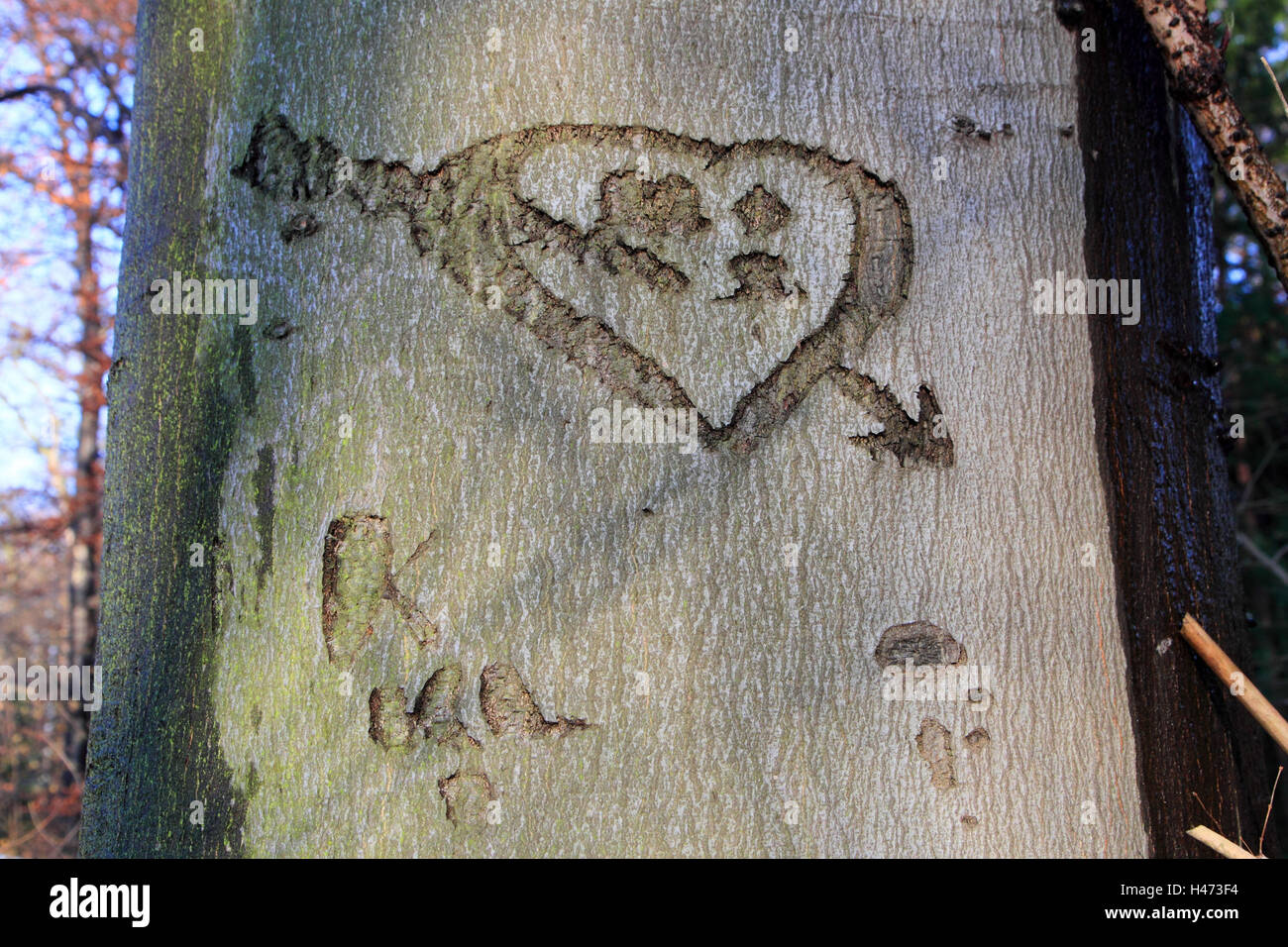Heart in tree scratched, - Stock Image