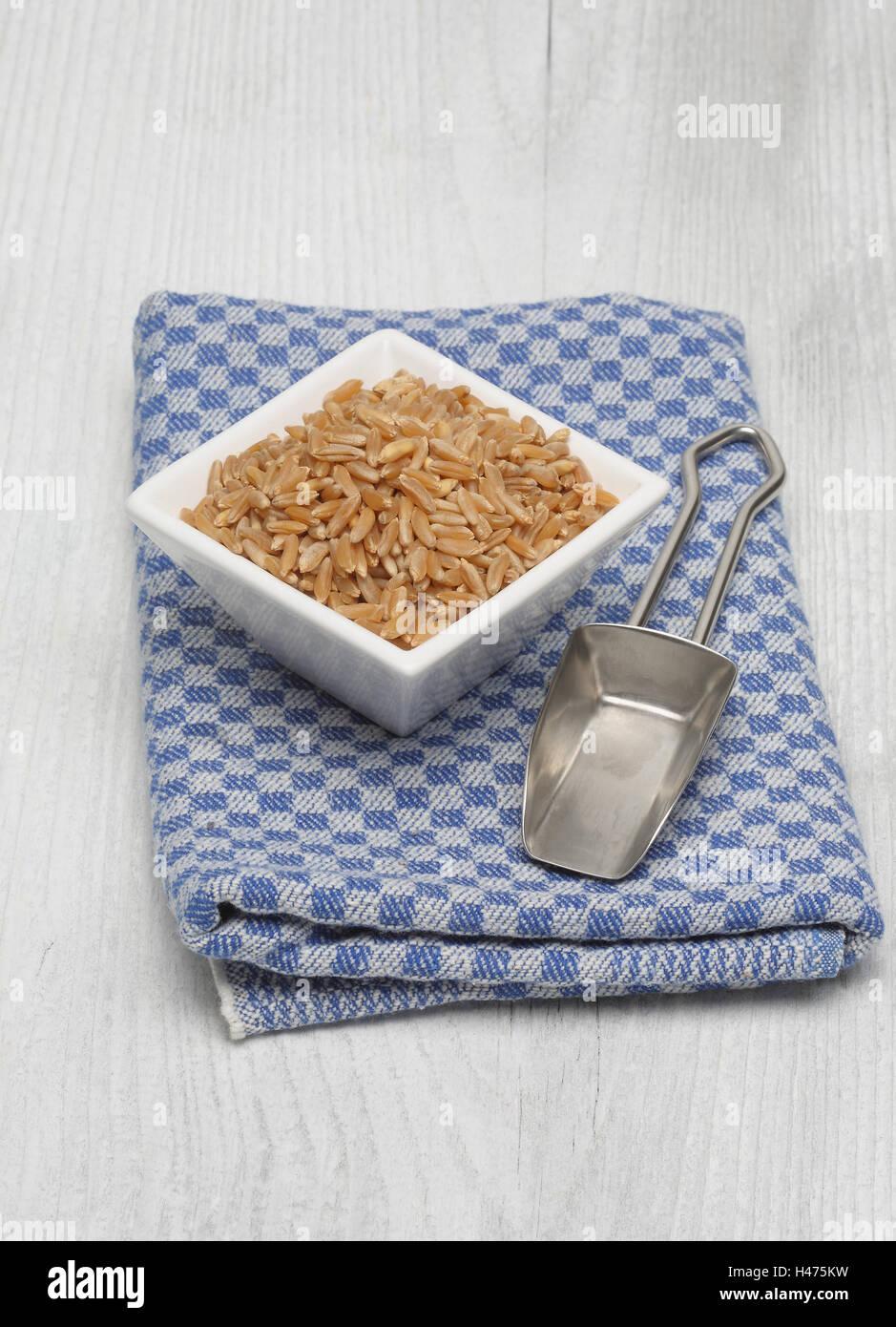 Ur cereal Kamut, Khorasan wheat, Triticum turgidum x polonicum Stock Photo