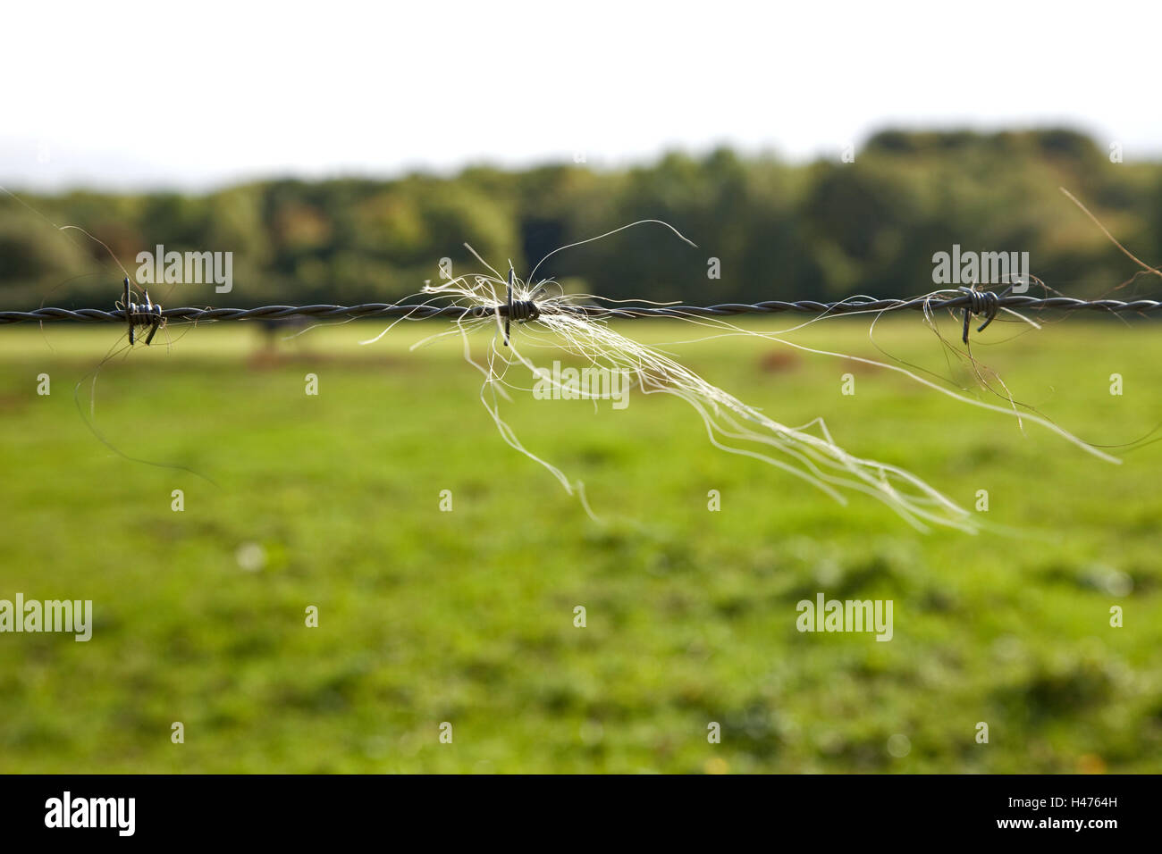 Barbed wire, horsehair, pasture, field, fence, meadow, rural Stock ...