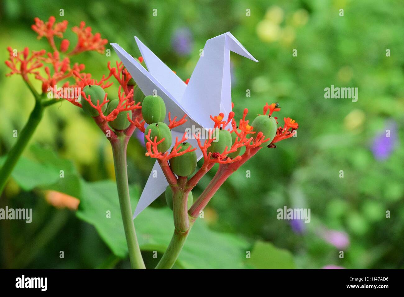 Origami hummingbird and crane on beautiful flowers in full spring in a litle garden. - Stock Image