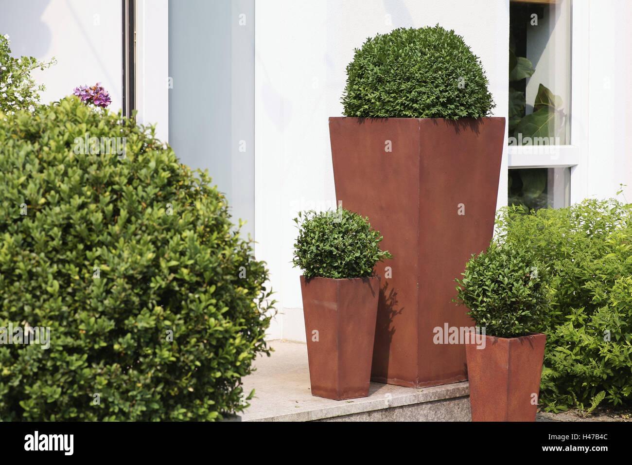 Boxwoods, different sizes, - Stock Image