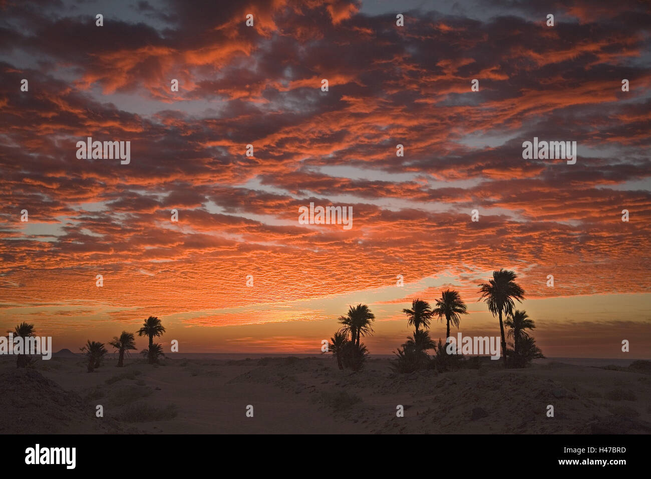 Algeria, Timimoun, desert, palms, heavens, clouds, red sky, Africa, North, Africa, scenery, nature, vegetation, - Stock Image
