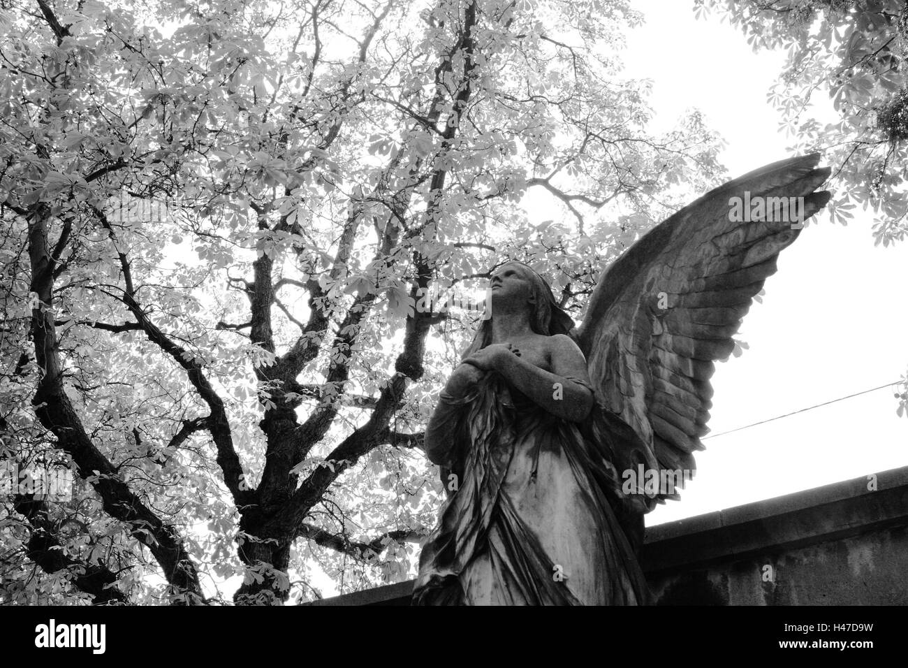 grave yard, grave, statue, angels, detail, s/w, - Stock Image