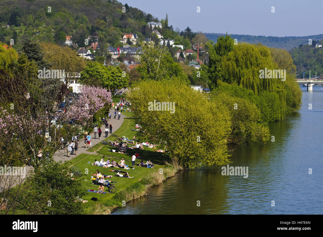 View at the Neckar, meadows with people, towpath, Heidelberg, Baden-Wurttemberg, Germany, - Stock Image