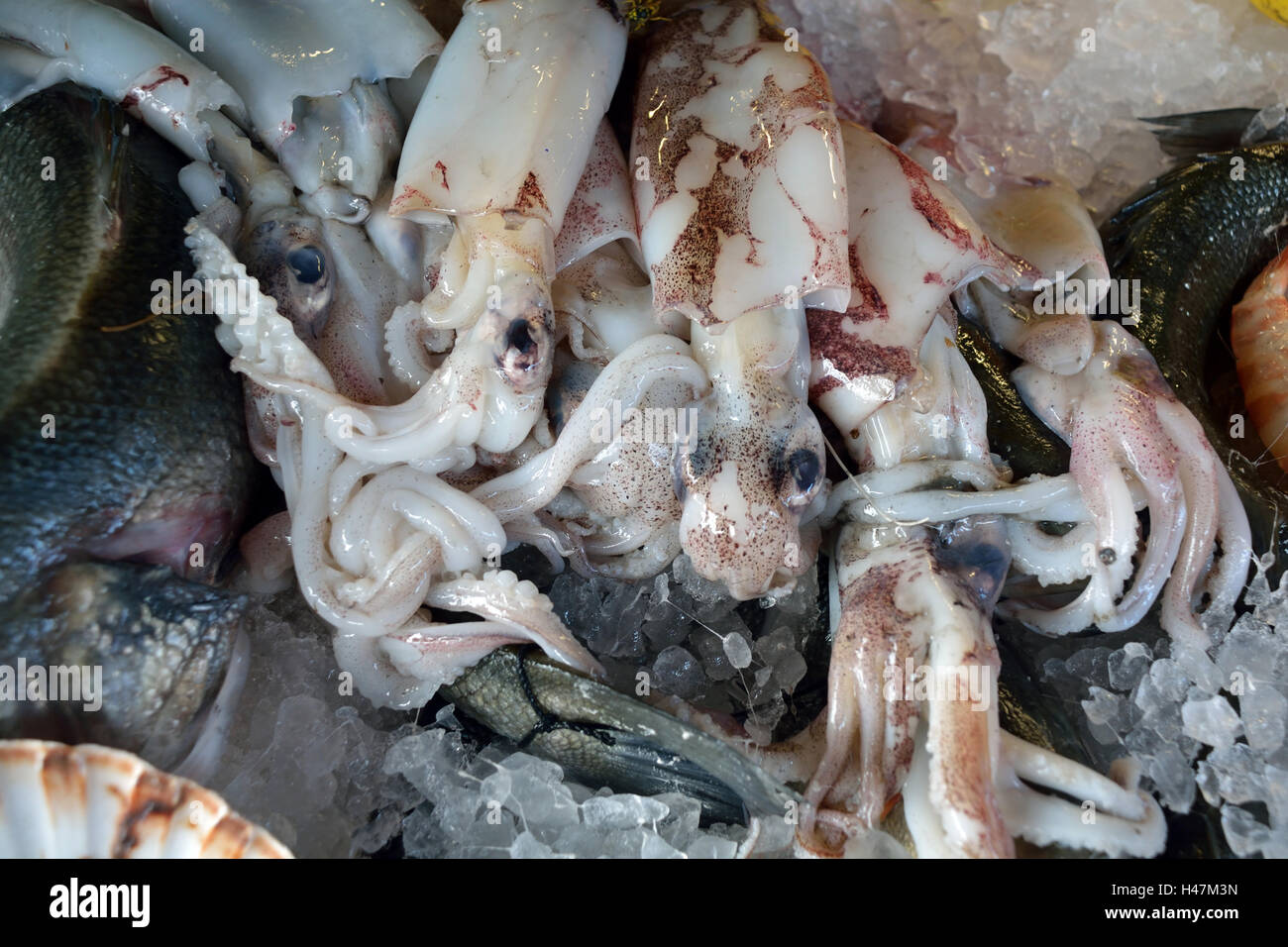 Seafood from the Adriatic Sea on a fish market on the Rialto Bridge of Venice in Italy. - Stock Image