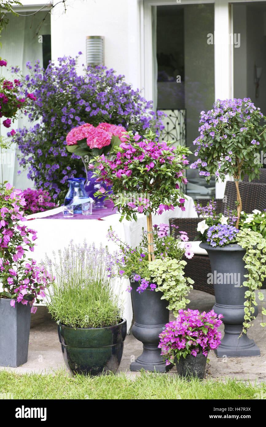 Terrace with potted plants in summer, lavender, gentian shrub, Bougainvillea, bellflower, fan flower, spurflower, Stock Photo