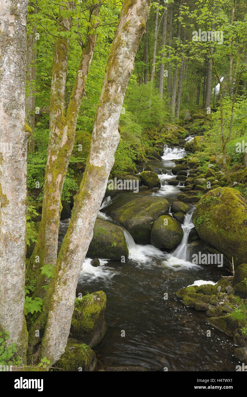 Germany, Baden-Württemberg, Black Forest, Triberg waterfalls, stream course, - Stock Image