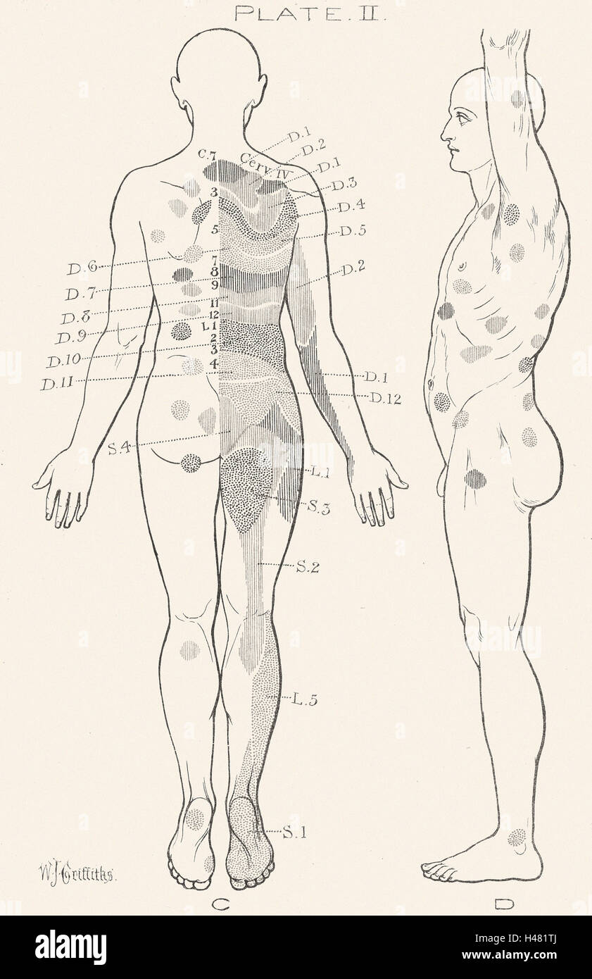 Illustration of the human body - Stock Image