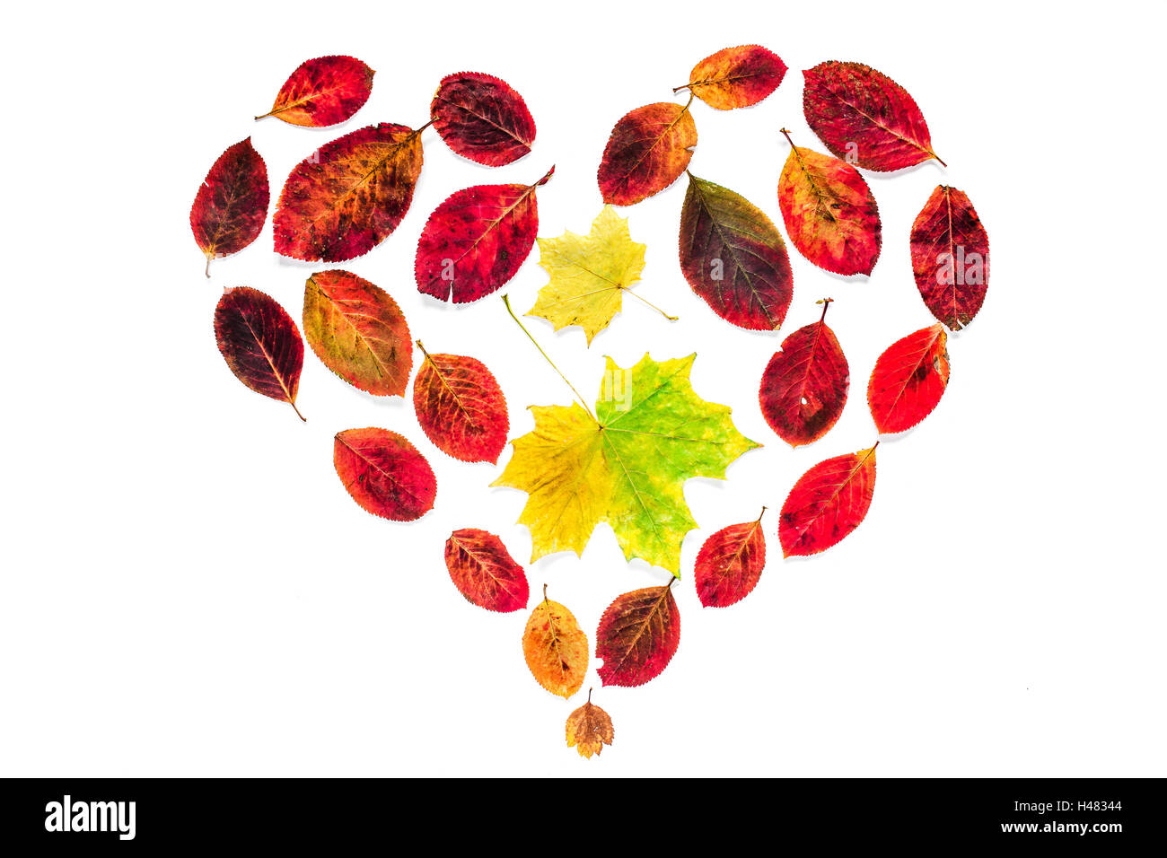 Abstract Heart Symbol Of Yellow Maple And Red Leaves Isolated On