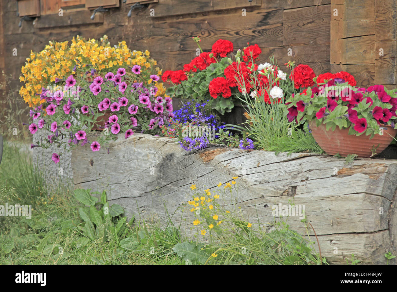 Window box, flowers, brightly, floral decoration, alpine hut, alp, wooden house, wooden wall, flower trough, wooden, - Stock Image