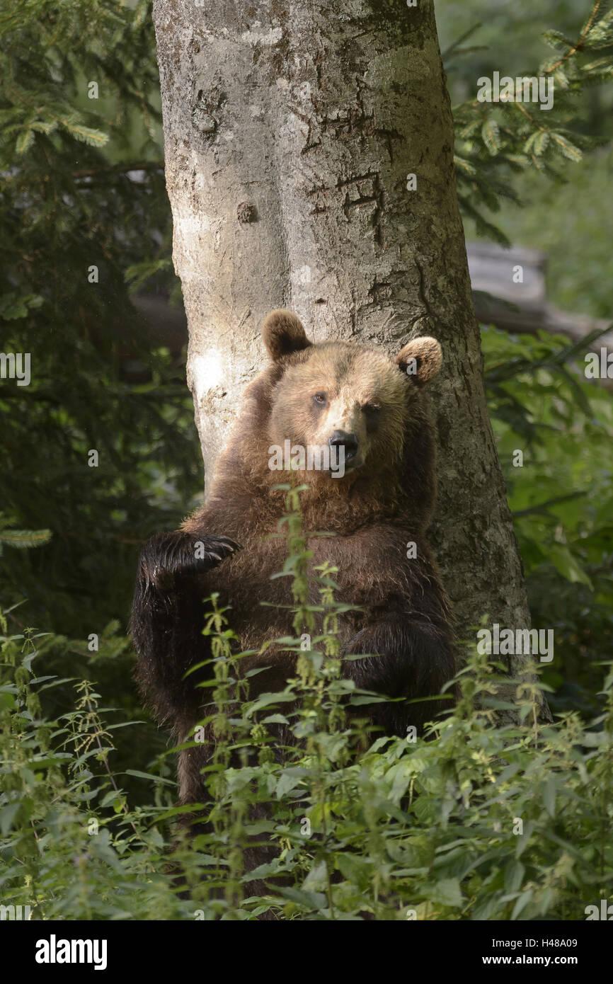 Bear Standing Claws Grass Stock Photos & Bear Standing Claws Grass ...