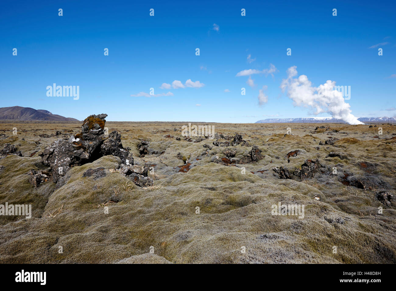 thick moss covered lava boulder field Iceland - Stock Image