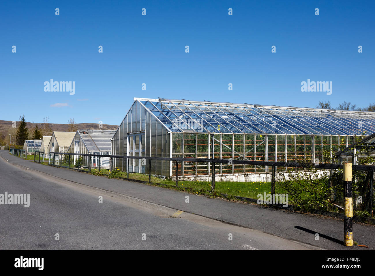 geothermally powered greenhouses in hveragerdi Iceland - Stock Image